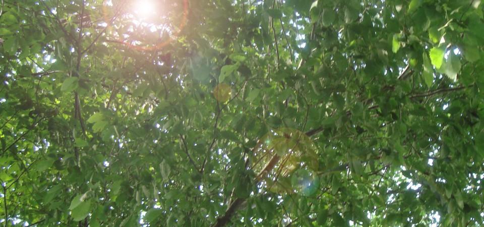 遠野の森はお話好き。<br /> ずっとずっと昔から、 いろいろなお話、ありました。<br /> 遠野の森の木の絵本、おはなしごっこの、<br /> はじまり、はじまり。